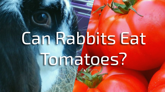 Can Rabbits Eat Tomatoes? Rabbit Diet Expert