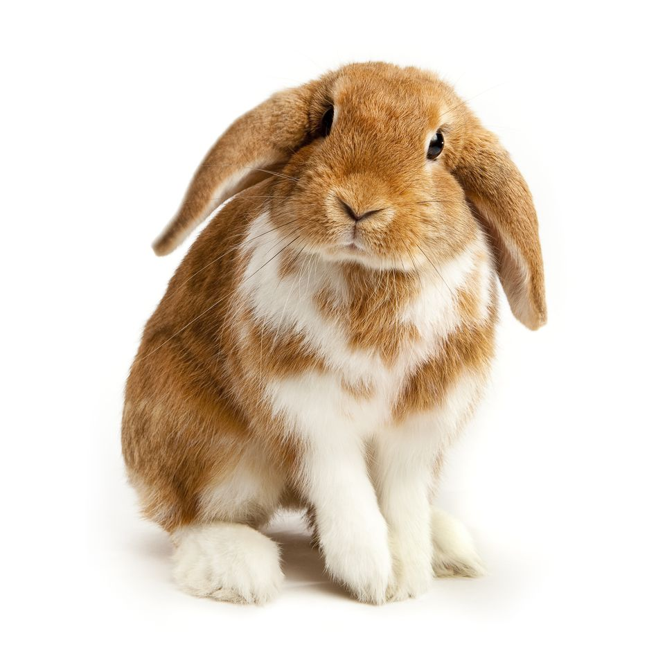 Complete Guide to Rabbit Breeds