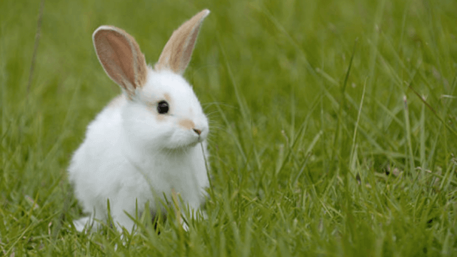 best-hay-for-rabbit