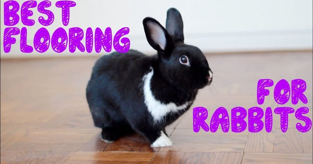 rabbit flooring