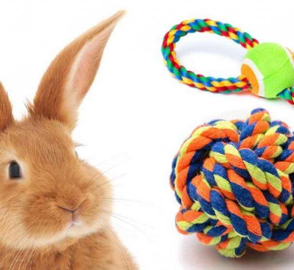 RabbitToys